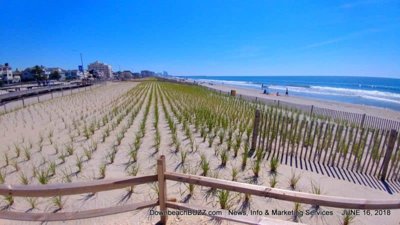 Ventnor Dune Covers Large Portion of Beach